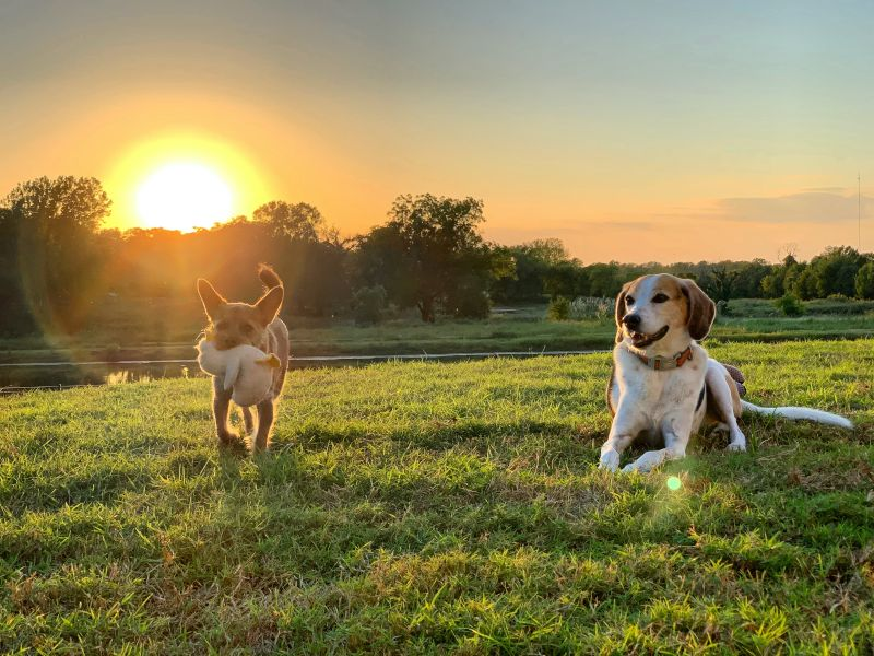 Pups Enjoying the Sunset