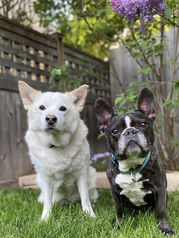 Best Puppies in the World (Sasha & Tank)