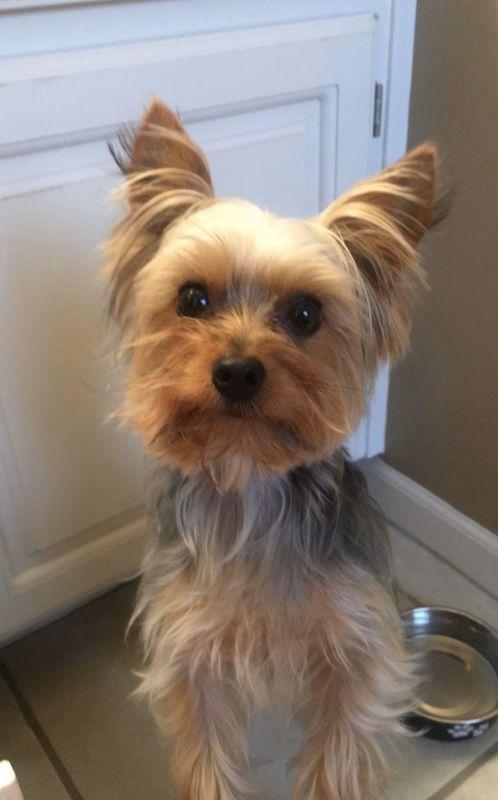 Our Dog, Mizzou