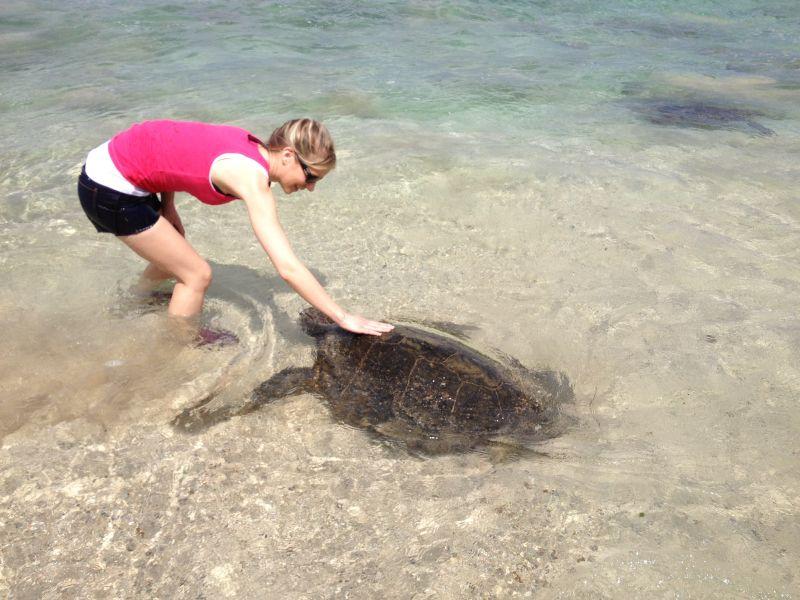 Nancy Petting a Sea Turtle
