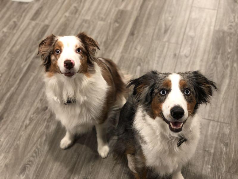 Our Pups, Scarlett & Heidi