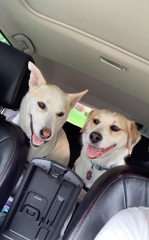 Our Pups Ready for a Hike!
