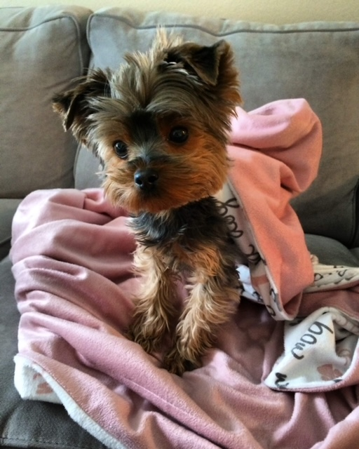 Suki, Our Sweet Little Dog