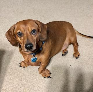 Our Sweet Pup, Oscar