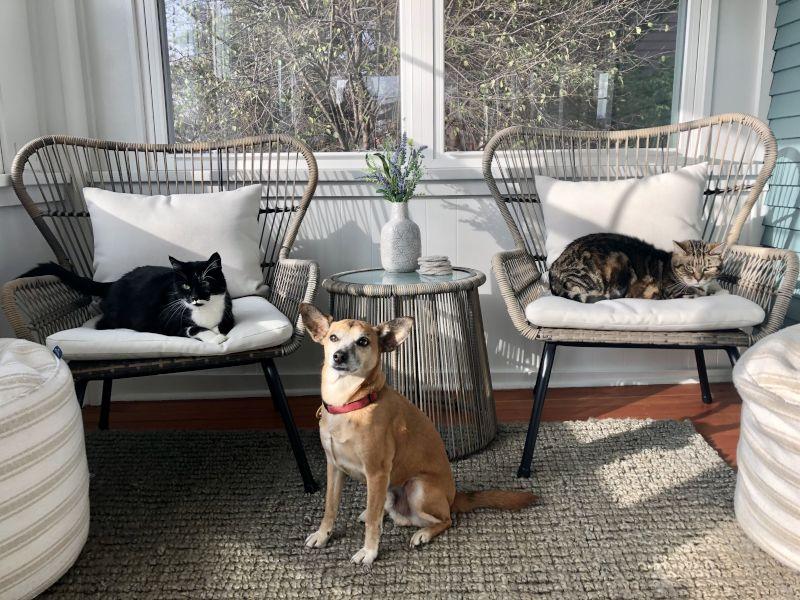 Our Pets - Dante, Louie & Zoe