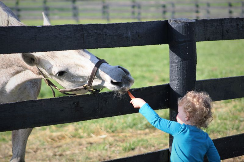 Visiting a Friend's Farm in Kentucky