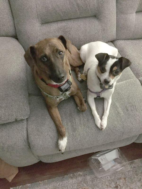 Our Pups, Remington & Bailey