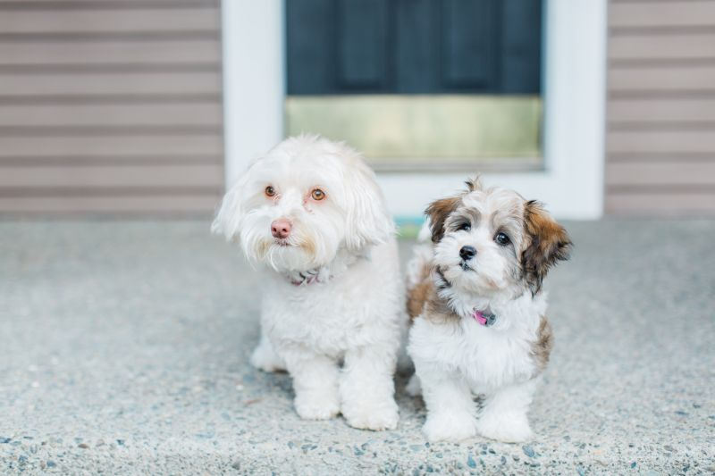 Our Pups, Rosie & Sunny
