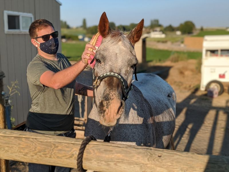 Ethan Grooming a Therapy Horse at a Charity He Volunteers With
