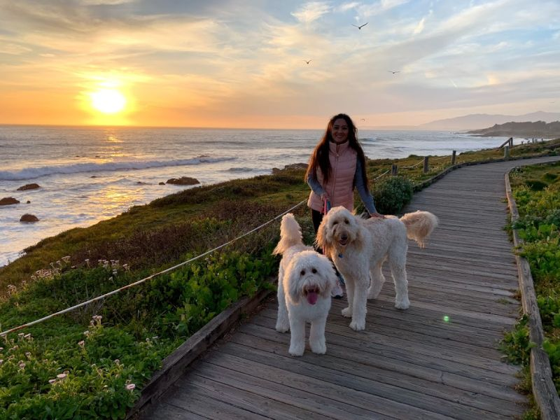 Sunset Walk With Our Dogs