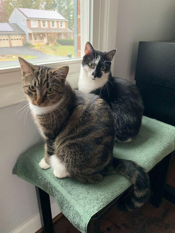 Our Cats, Denali & Kondike