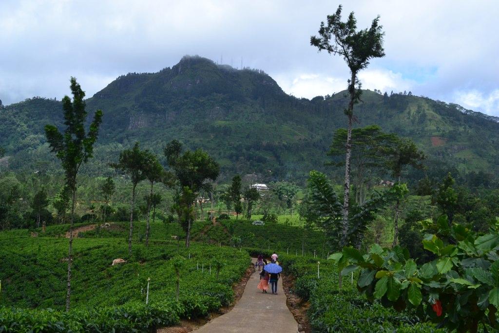 Touring a Tea Plantation in Sri Lanka
