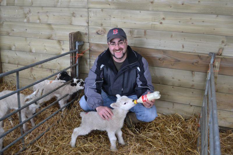 Feeding a Lamb in England