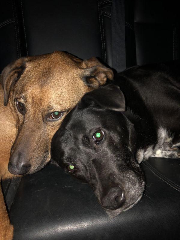 Vera & Ruby