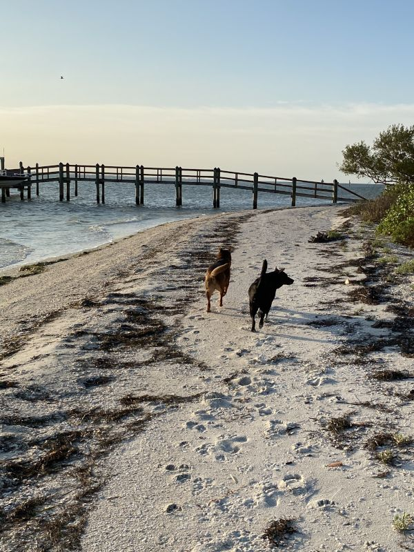 Beach Walk With Our Dogs