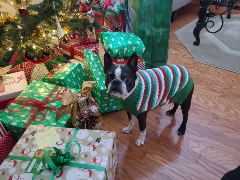 Gus at Christmas