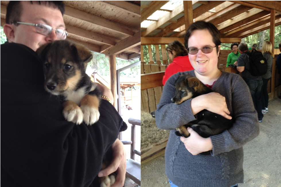 Playing With Sled Dog Puppies in Alaska