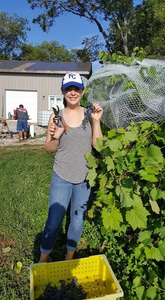Volunteering at a Grape Harvest