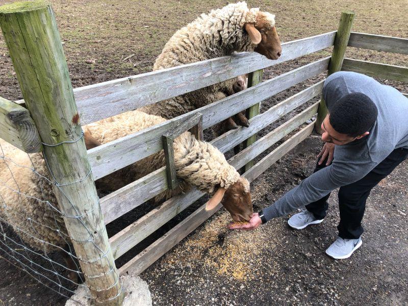 Feeding Sheep During an Anniversary Trip