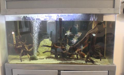 Sean's Aquarium
