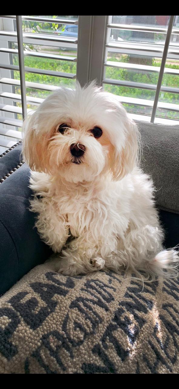 Our Pup, Beckham