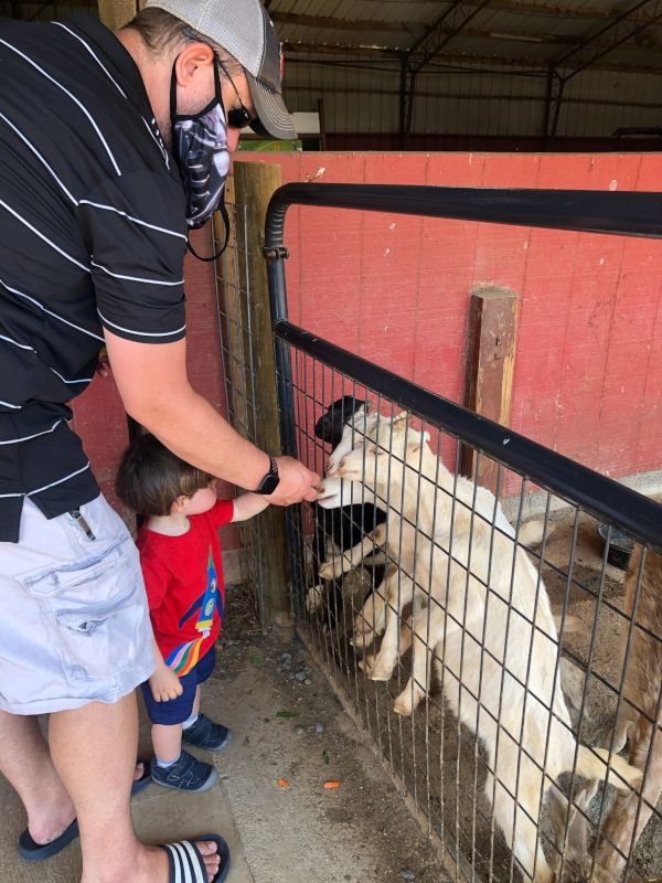 At a Petting Zoo