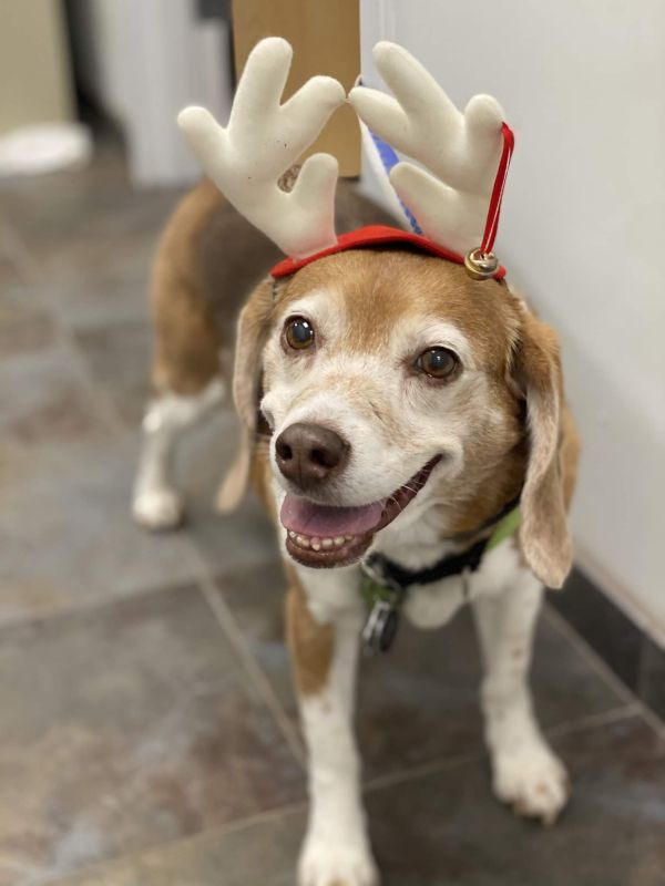 Our Dog, Sadie