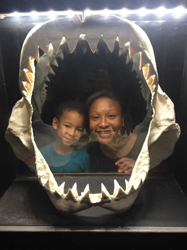 Oh No, We Are in a Shark's Mouth!