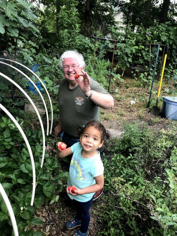 Picking Strawberries With Grandpa
