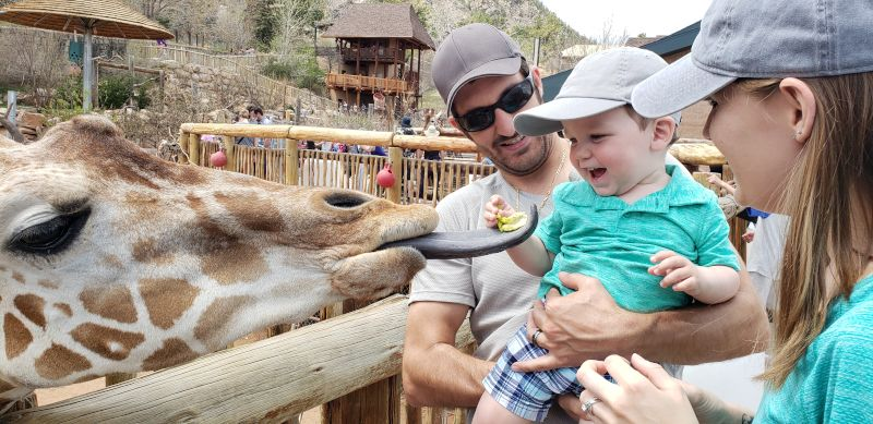 Giraffes! (Weston's Favorite)